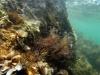 Adriatyk - Wyspa VIR, fot. M. Zapora