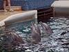 Delfinarium w Varnie - Bułgaria, fot. K. Meger