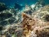 Adriatyk pod wodą / Korčula - Chorwacja, fot. M. Zapora