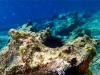 Adriatyk pod wodą / Korčula - Chorwacja, fot. K. Meger