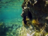 Czarnogóra - Adriatyk podwodą, fot. M. Zapora