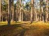 Złoty Potok - Polska, fot. K. Meger